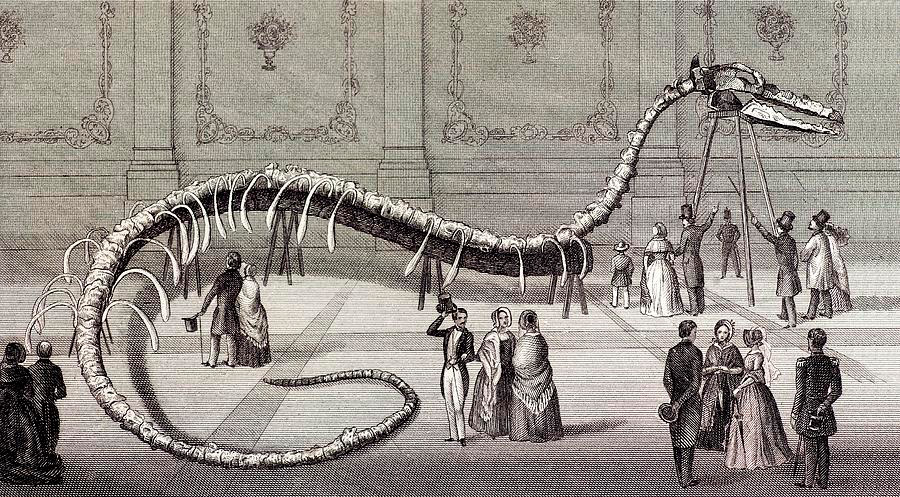 hydrarchos_1845