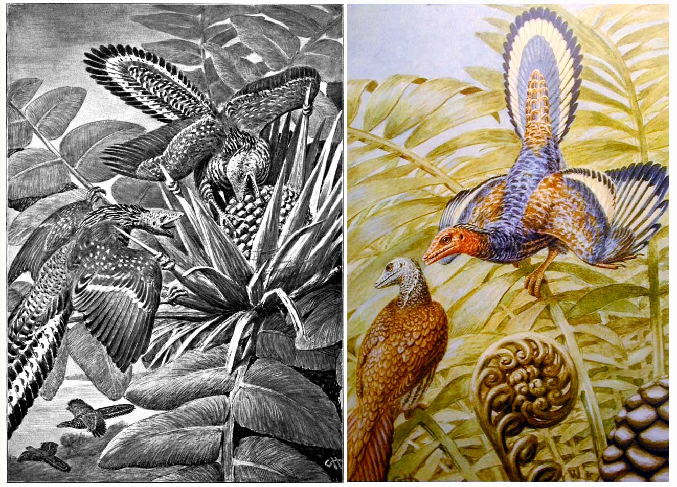 Heilmann's Archaeopteryxes from 1912 (left) and 1926 (right). Click to enlarge.